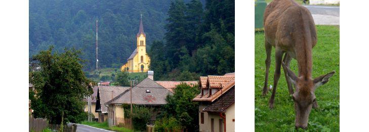Hirschkuh Zuza Schmöllnitz Hütte