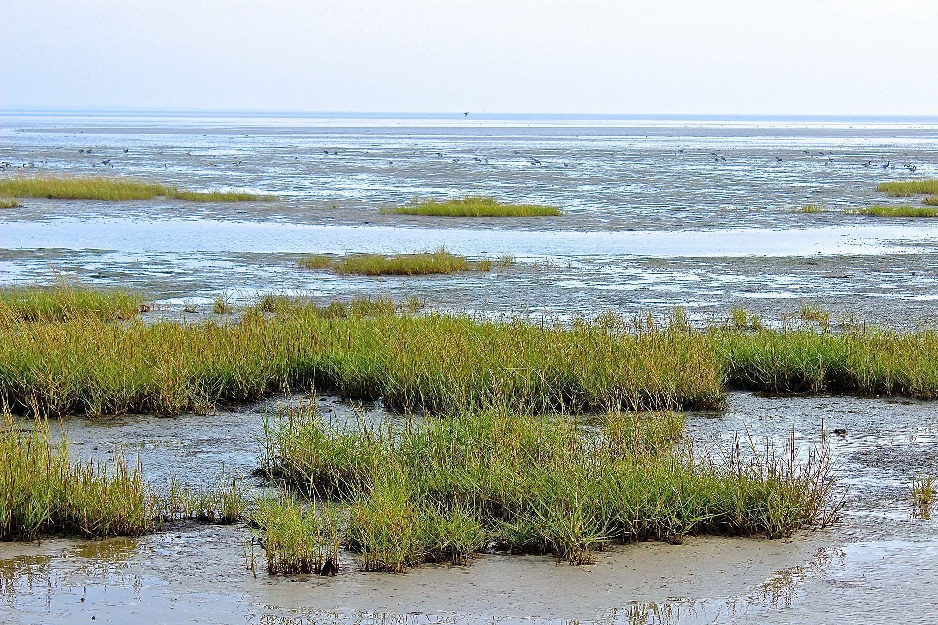 Wattenmeer Unesco