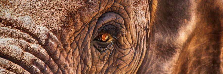 Ein Elefantengedächtnis haben