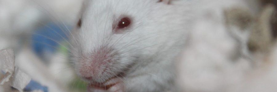 Redewendung Weiße Mäuse sehen