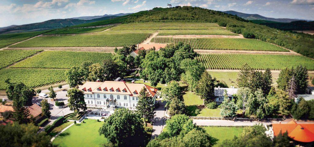 Degenfeld Wein