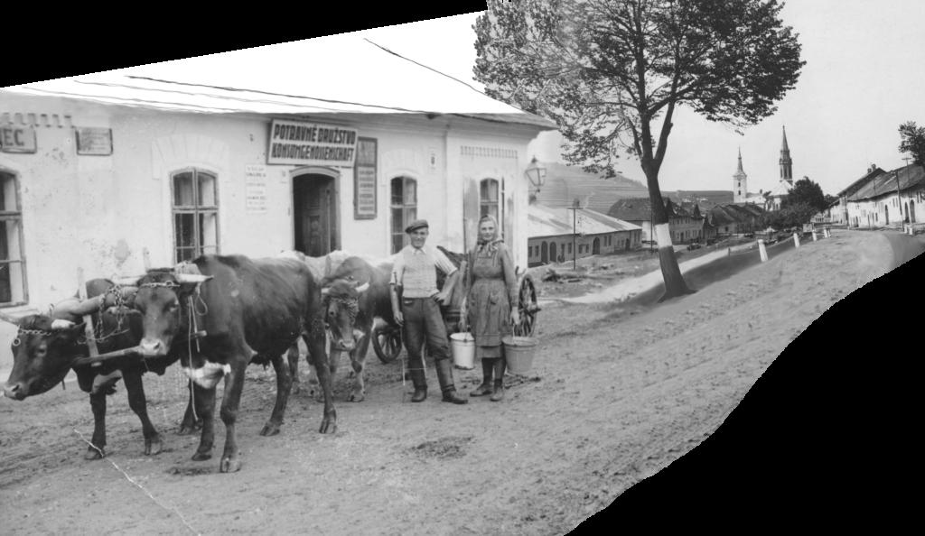 Ochsenfuhrwerk vor dem Konsum